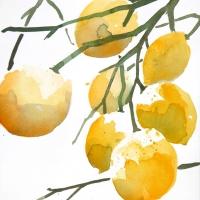 Zitronen I, 2015