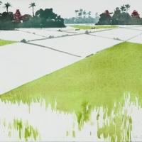 Reisfelder, MM, 2018