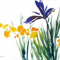 Trollblumen und Iris, 2010
