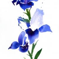 Iris, 2010