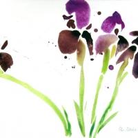 Iris, 2005