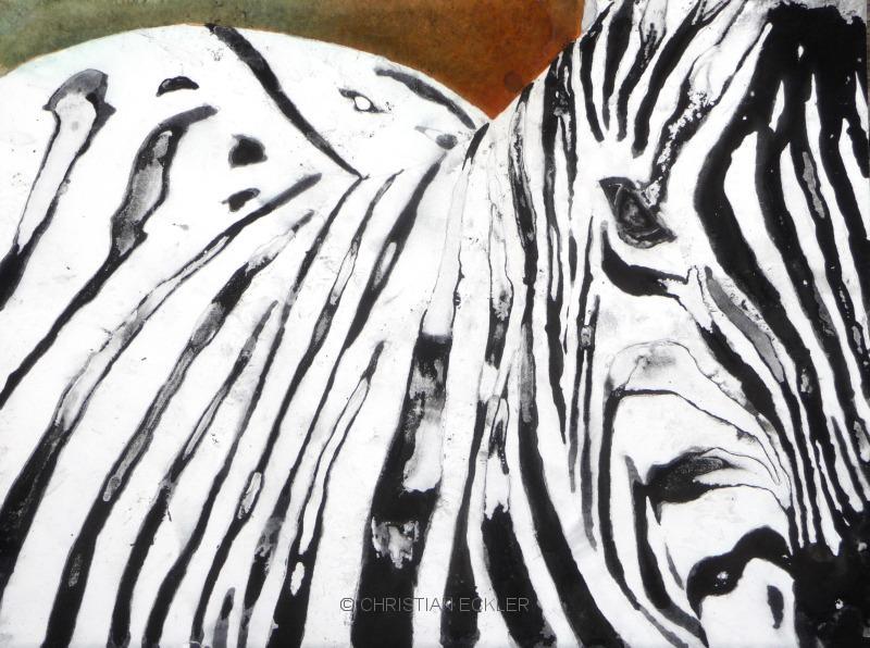 Zebra, 2009