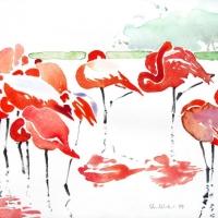 Flamingos, 2009
